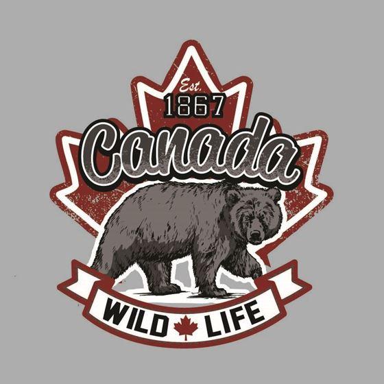 Image de 296 CANADA WILD BEAR